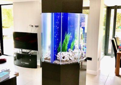 Pair of 6 Sided Aquariums, Leeds (52)